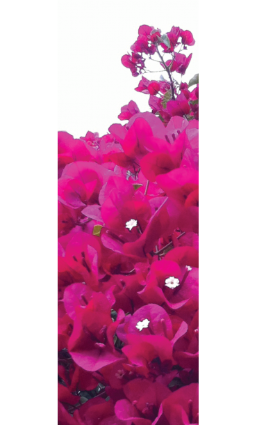 Bougainvillea Printed Yoga Fitness Mat